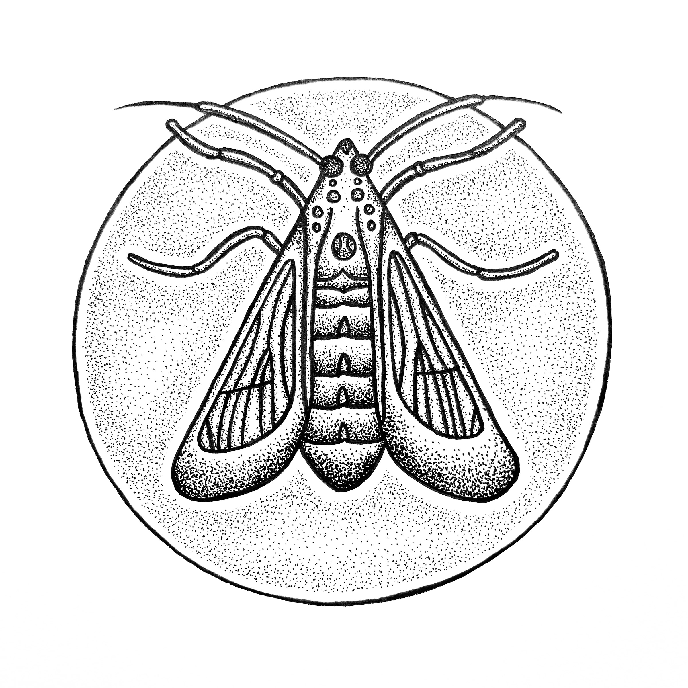Moth Drawing
