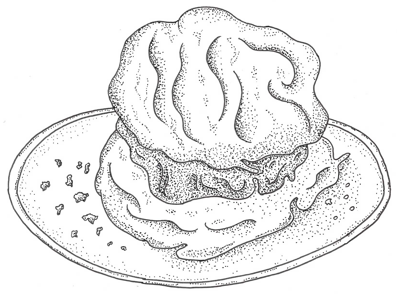 Cathead Biscuit Illustration