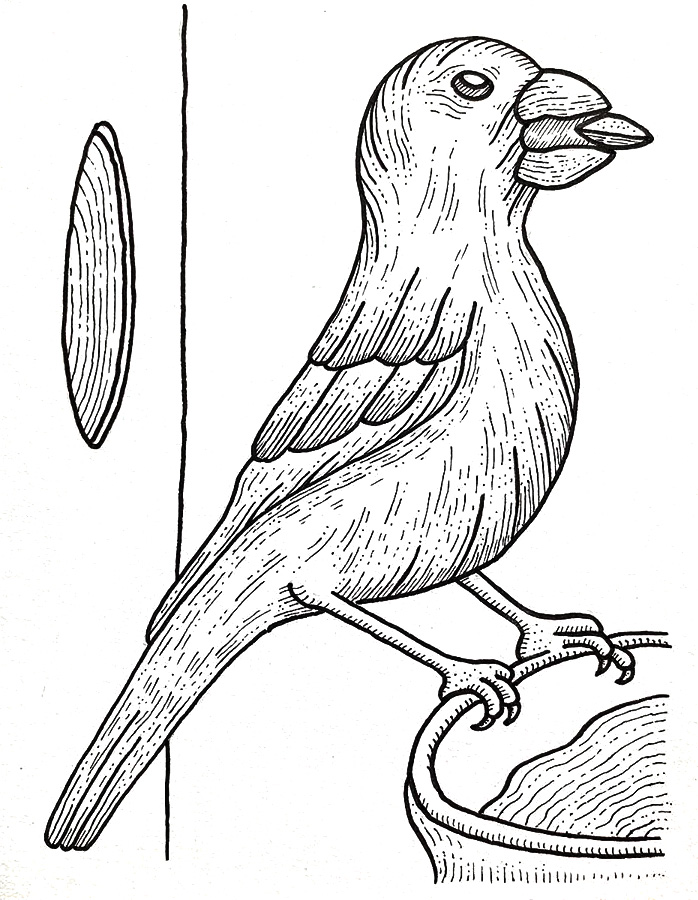 Finch bird drawing