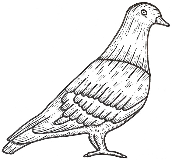 Pigeon Drawing